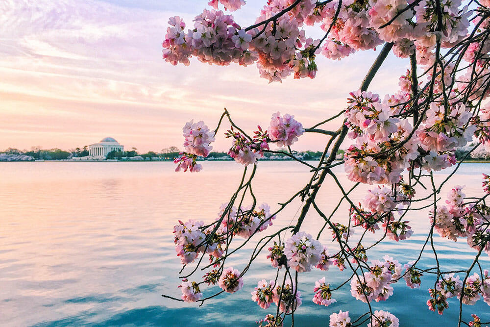 Where to See Cherry Blossoms Around the World